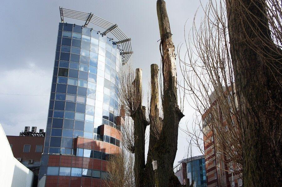 Горадминистрация намерена обучать коммунальщиков правильной обрезке деревьев