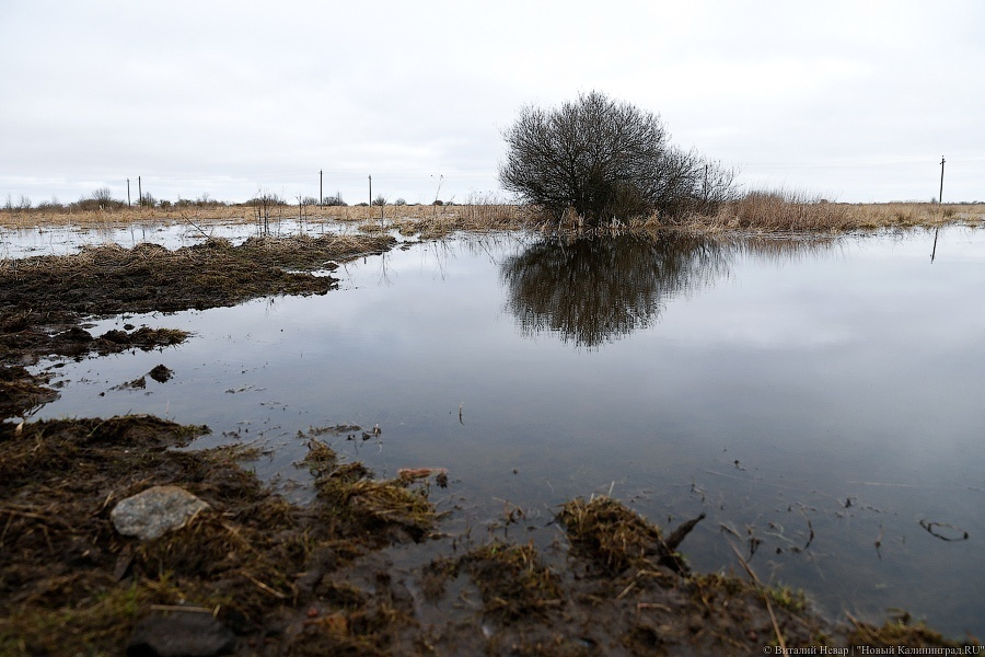 Калининград оценил вред отпотери урожая в200 млн руб.