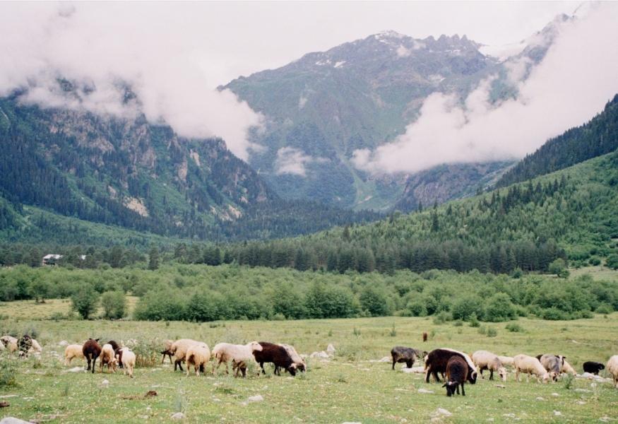 Погода в п. горный краснопартизанский район саратовская область