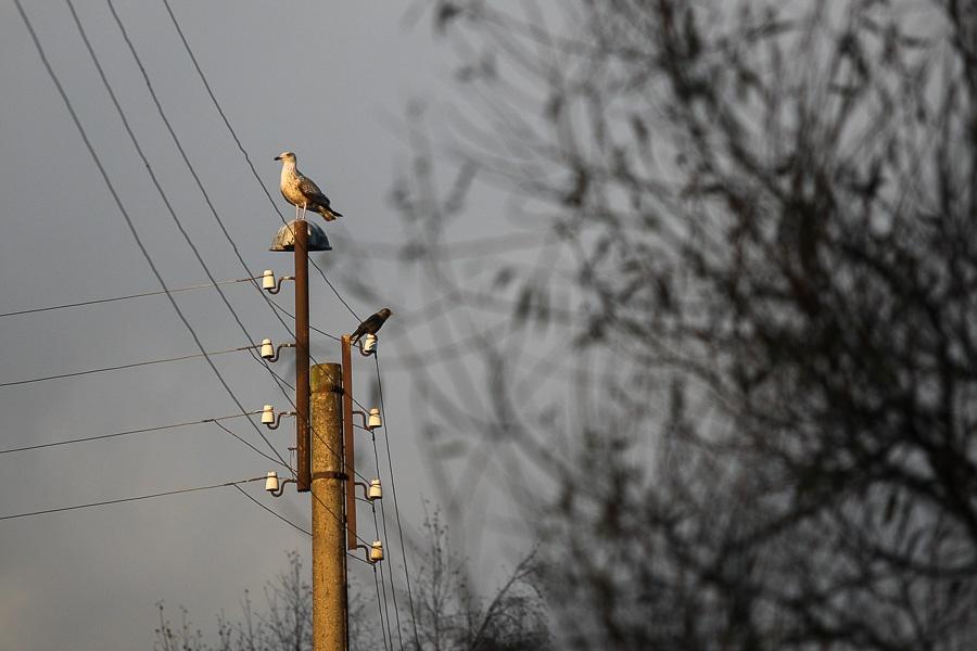 Штормовой ветер обесточил дома исоцобъекты вКалининградской области