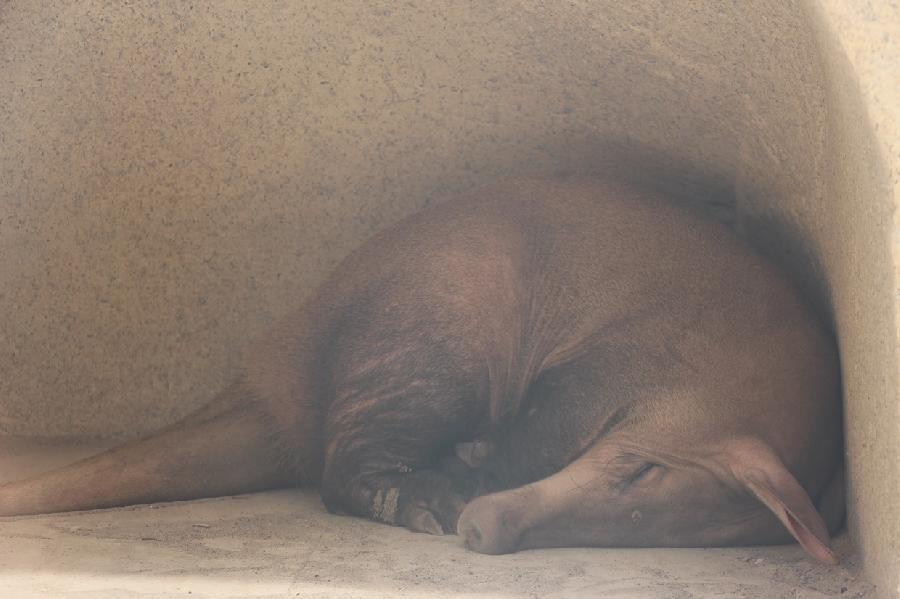Фото Калининградского зоопарка