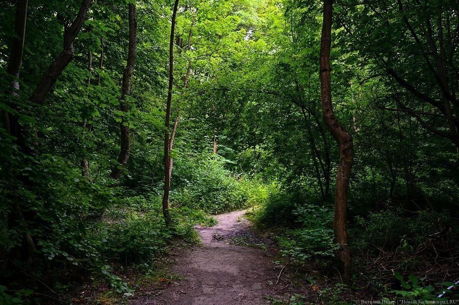 Областные власти обозначили Суздальский лес как зону сложившейся высотной жилой застройки