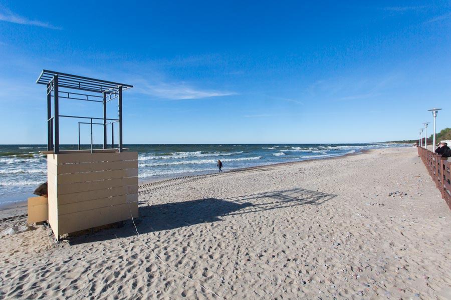 Набалтийском побережье Куршской косы вКалининградской области зафиксирован мор тюленей