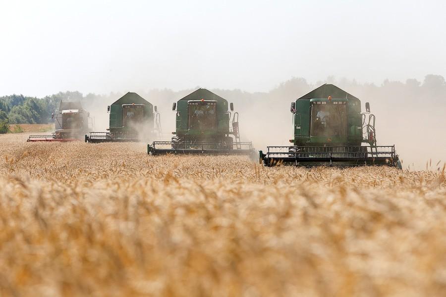 Минсельхоз: урожай зерновых достиг наивысших показателей за всю историю области
