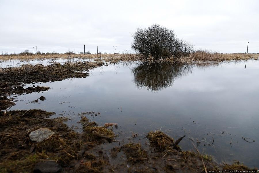 ВКалининградской области погибло 20 000 гектаров сельхозкультур