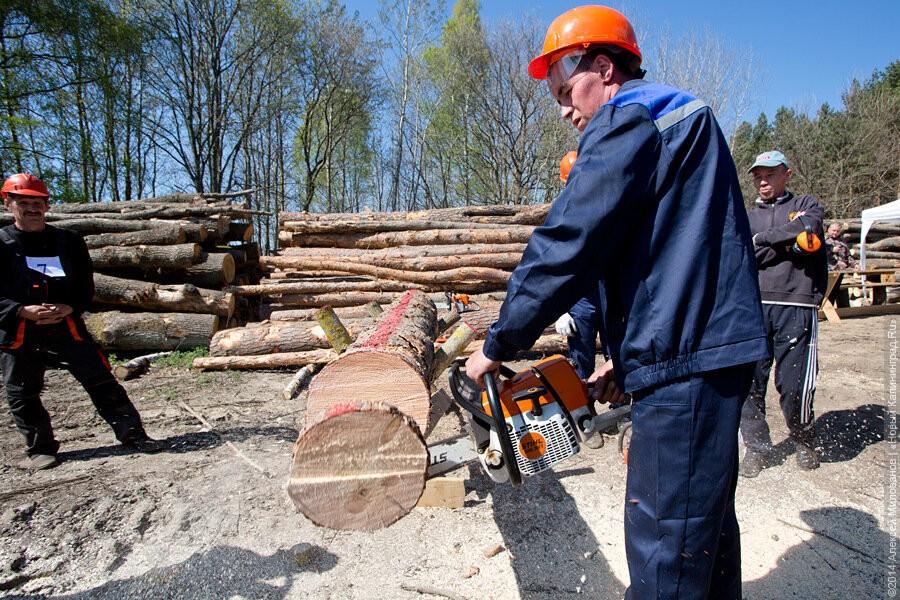 Облвласти отбирают у лесников полномочия по отводу лесосек для населения