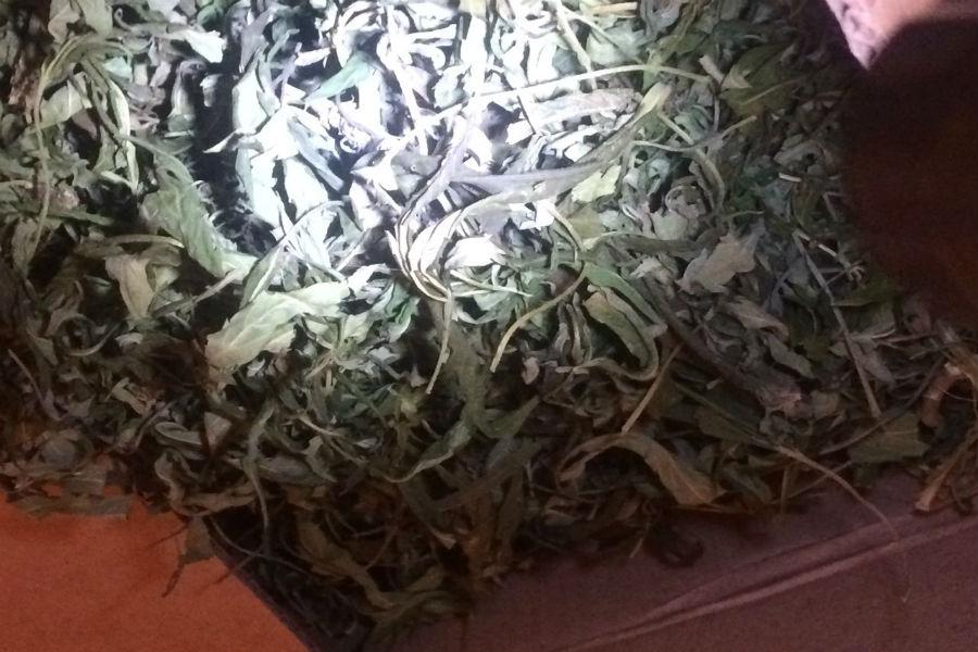 4 килограмма конопли поле конопли в харьковской области