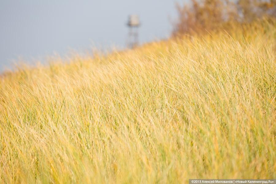 ВКалининградской области вырастят немецкую пшеницу