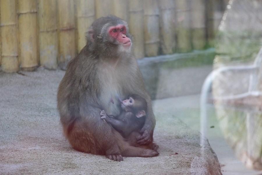 Фото со страницы в «Фейсбуке» Калининградского зоопарка