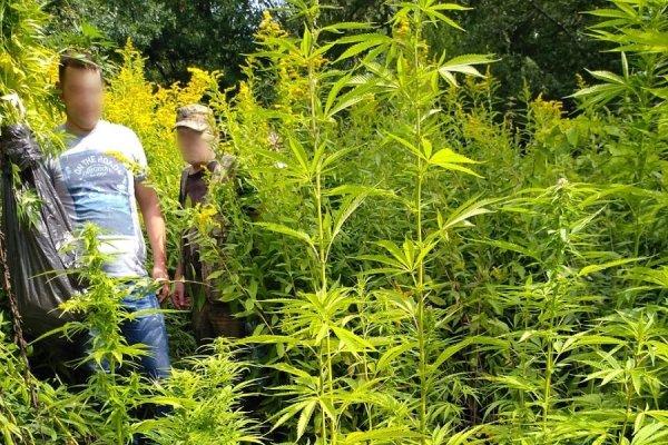 У папки конопли марихуана и уголовная ответственность