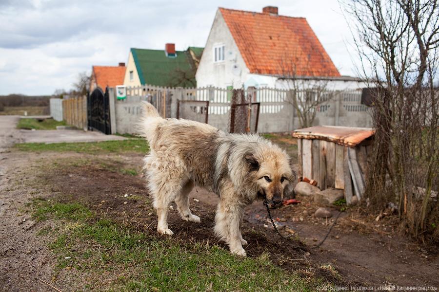 Оставленная без присмотра собачка обошлась семье изАчинска в 50 000 руб.