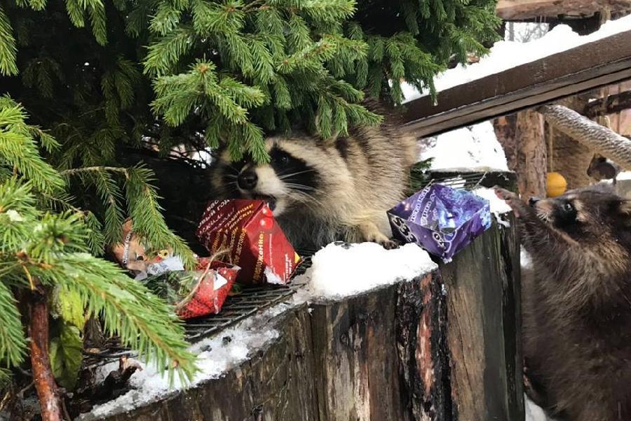 тогда фото енота в новый год весь реквизит