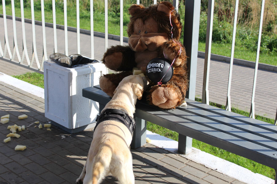На ж/д станции вКалининграде взрывотехники обследовали подозрительного плюшевого медведя