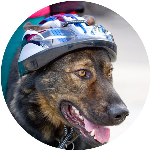 3500 собак служит в Минобороны