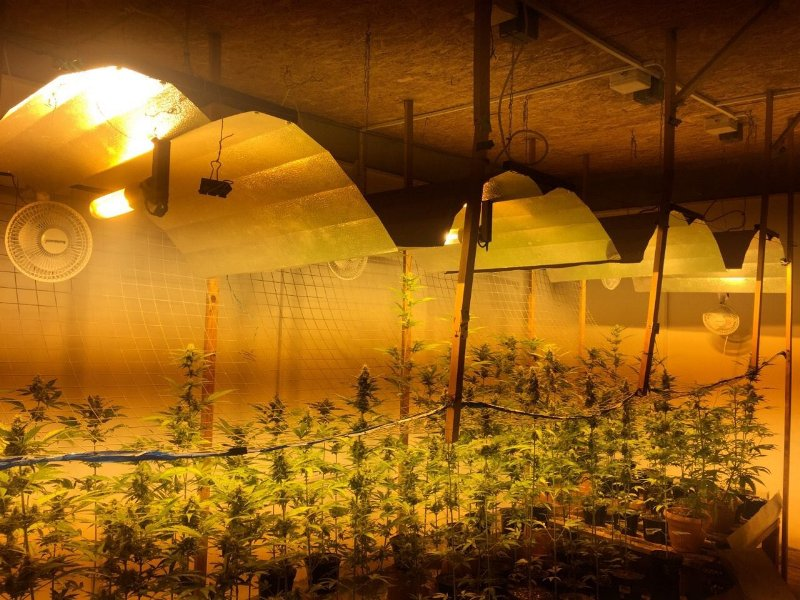 Калининград марихуана какой запах имеет марихуана