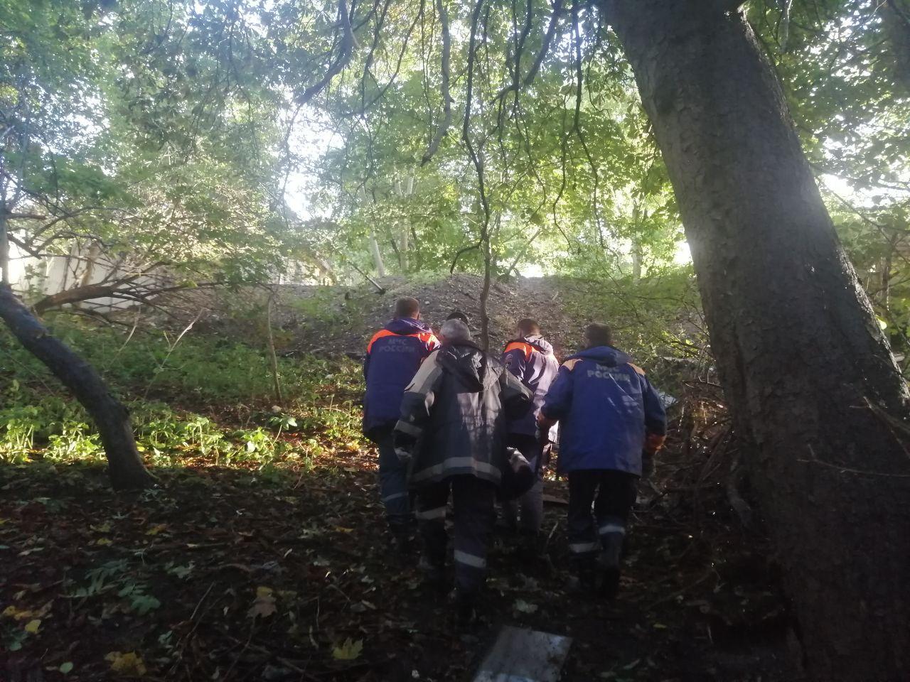 Автомобилисты предупреждают об упавшем на дорогу дереве в Нестеровском районе (фото)